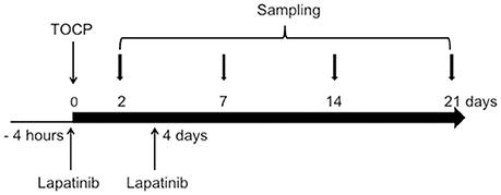 Frontiers   Activation of Neuregulin 1/ErbB Signaling Is