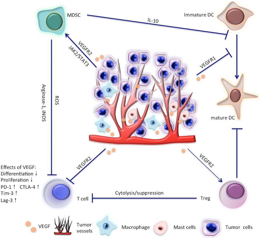 Simptome, tratamente și dietă pentru cancerul ovarian   daisysara.ro