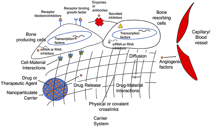 Frontiers | Biomaterials for the Delivery of Growth Factors and