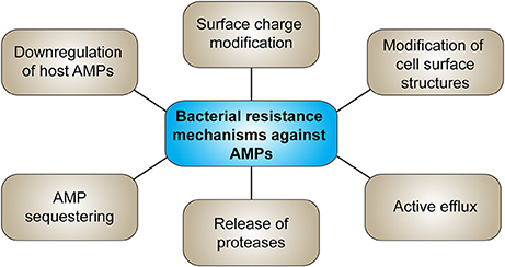 Frontiers | Antimicrobial Peptides and Their Therapeutic
