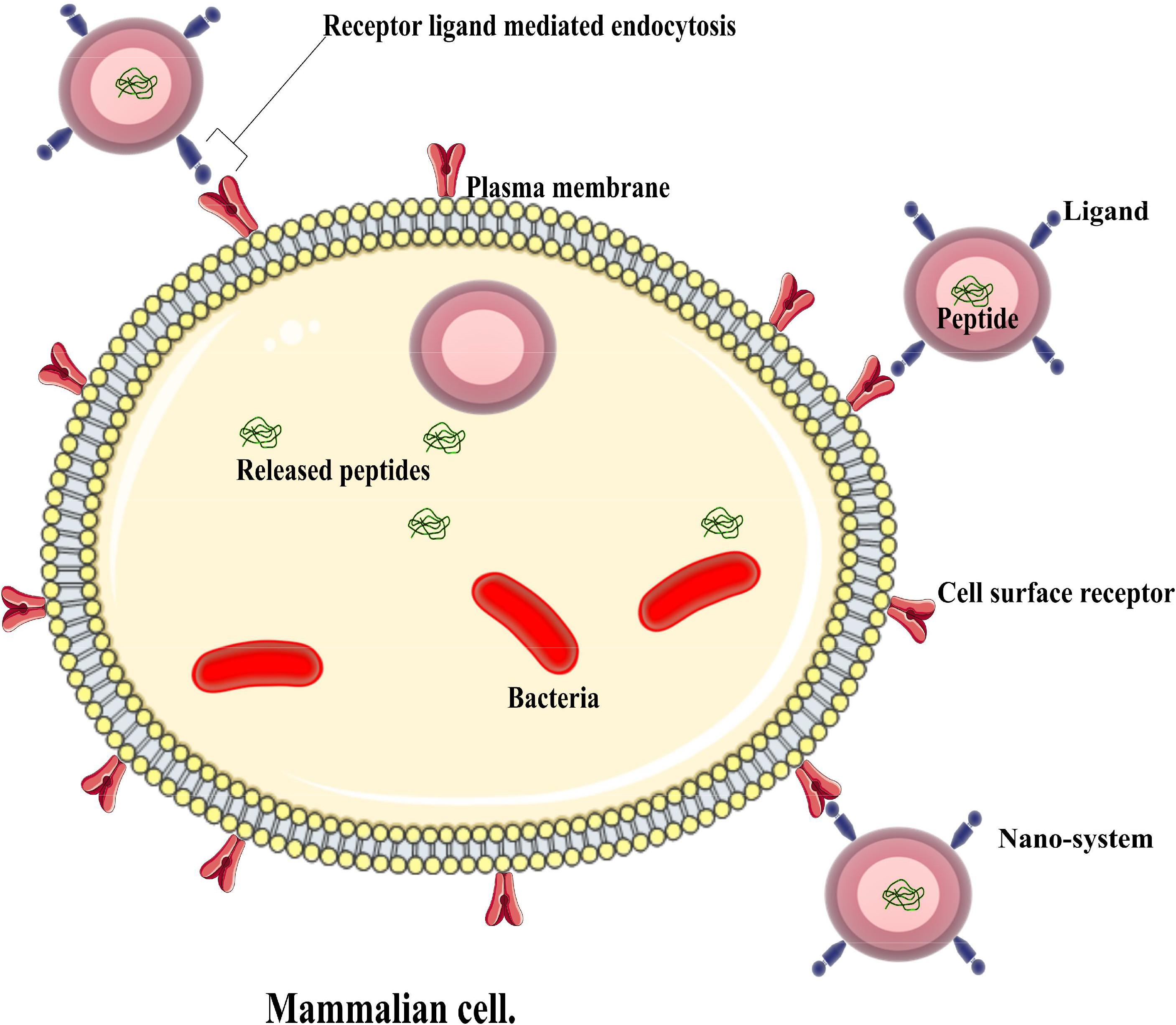 Frontiers   Antimicrobial Peptides and Nanotechnology, Recent