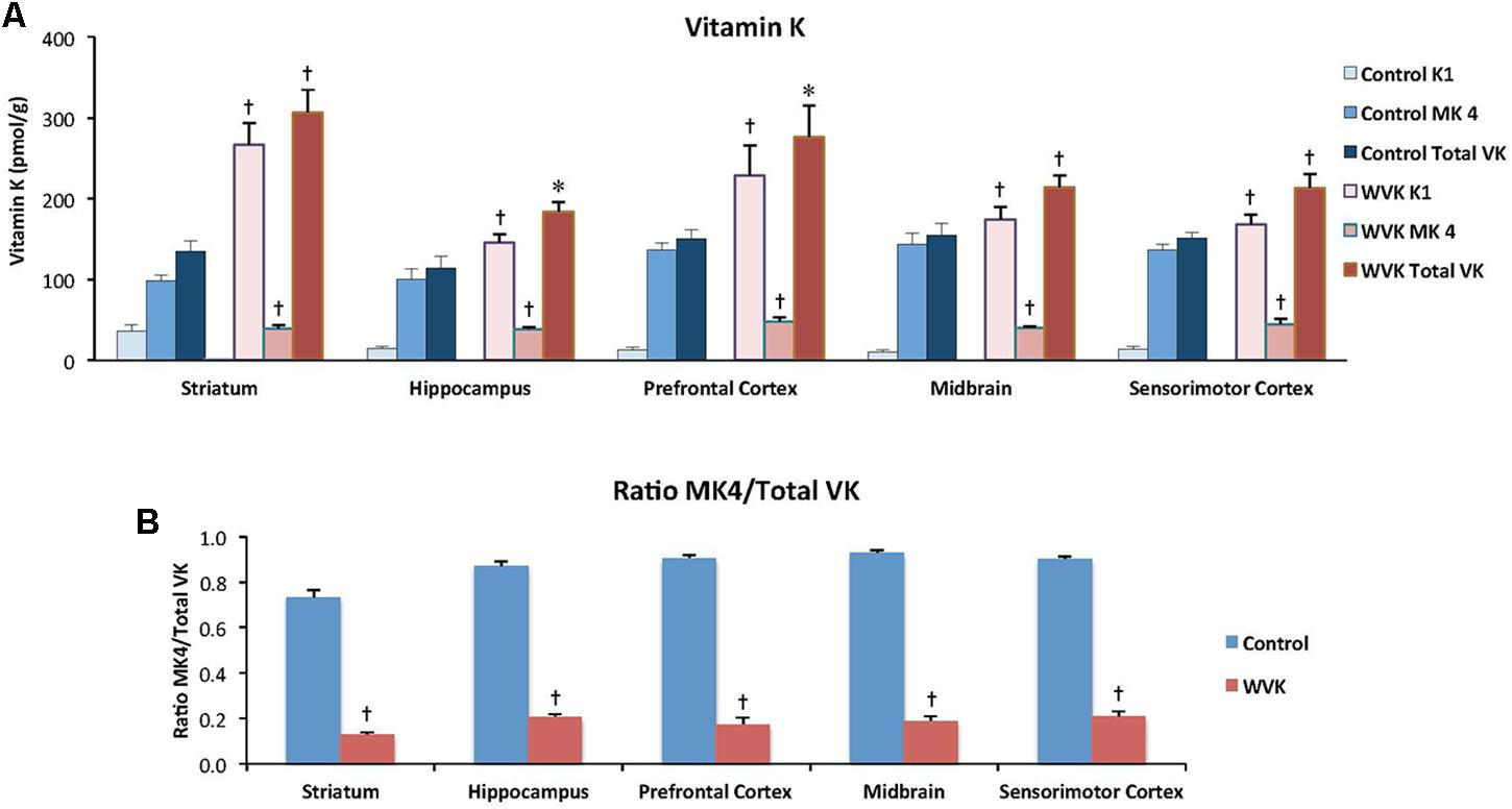 Frontiers | Vitamin K Deficiency Induced by Warfarin Is