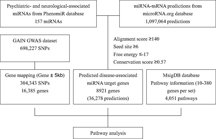 Frontiers Incorporating Information Of Micrornas Into Pathway