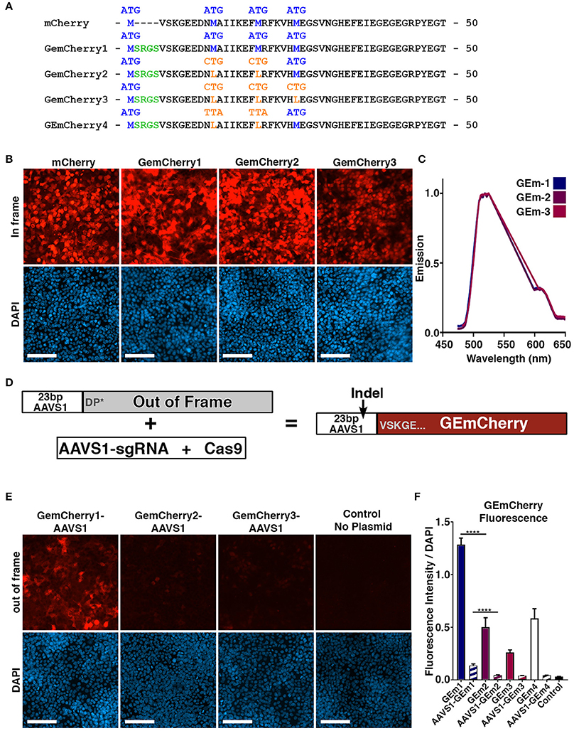 Frontiers | A Modified Monomeric Red Fluorescent Protein