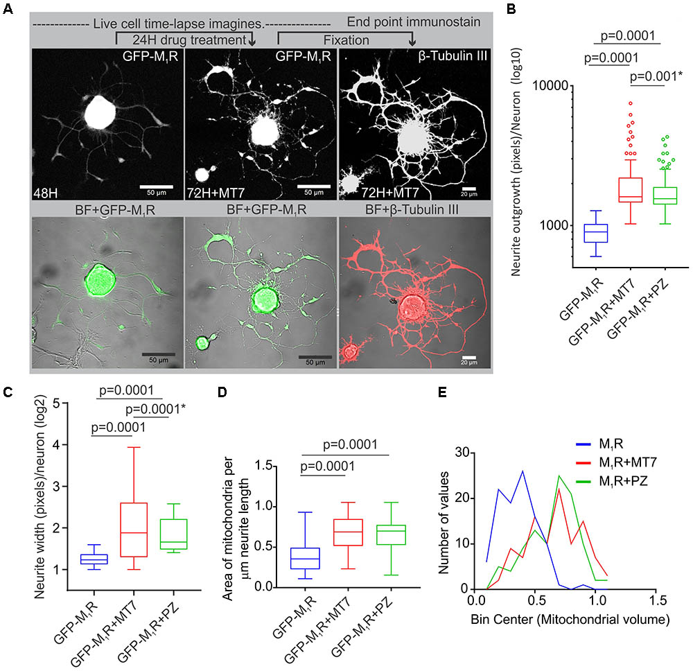 Frontiers | Muscarinic Acetylcholine Type 1 Receptor Activity