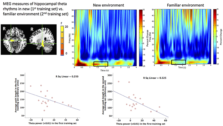 Frontiers | Non-invasive Investigation of Human Hippocampal