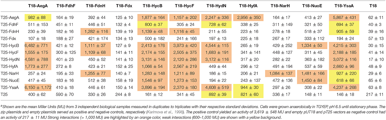 Frontiers | The Ferredoxin-Like Proteins HydN and YsaA