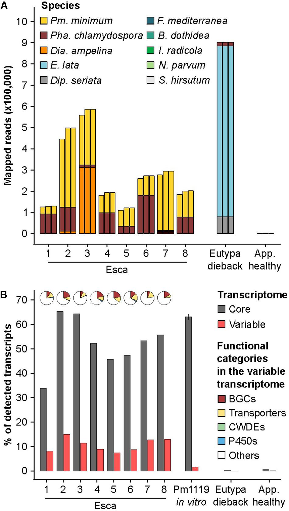 Frontiers | Whole-Genome Resequencing and Pan-Transcriptome