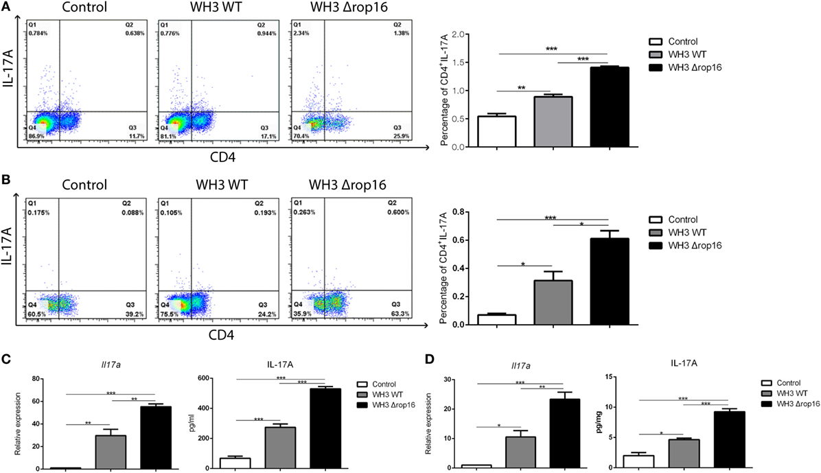 Frontiers   Toxoplasma Chinese 1 Strain of WH3Δrop16I/III