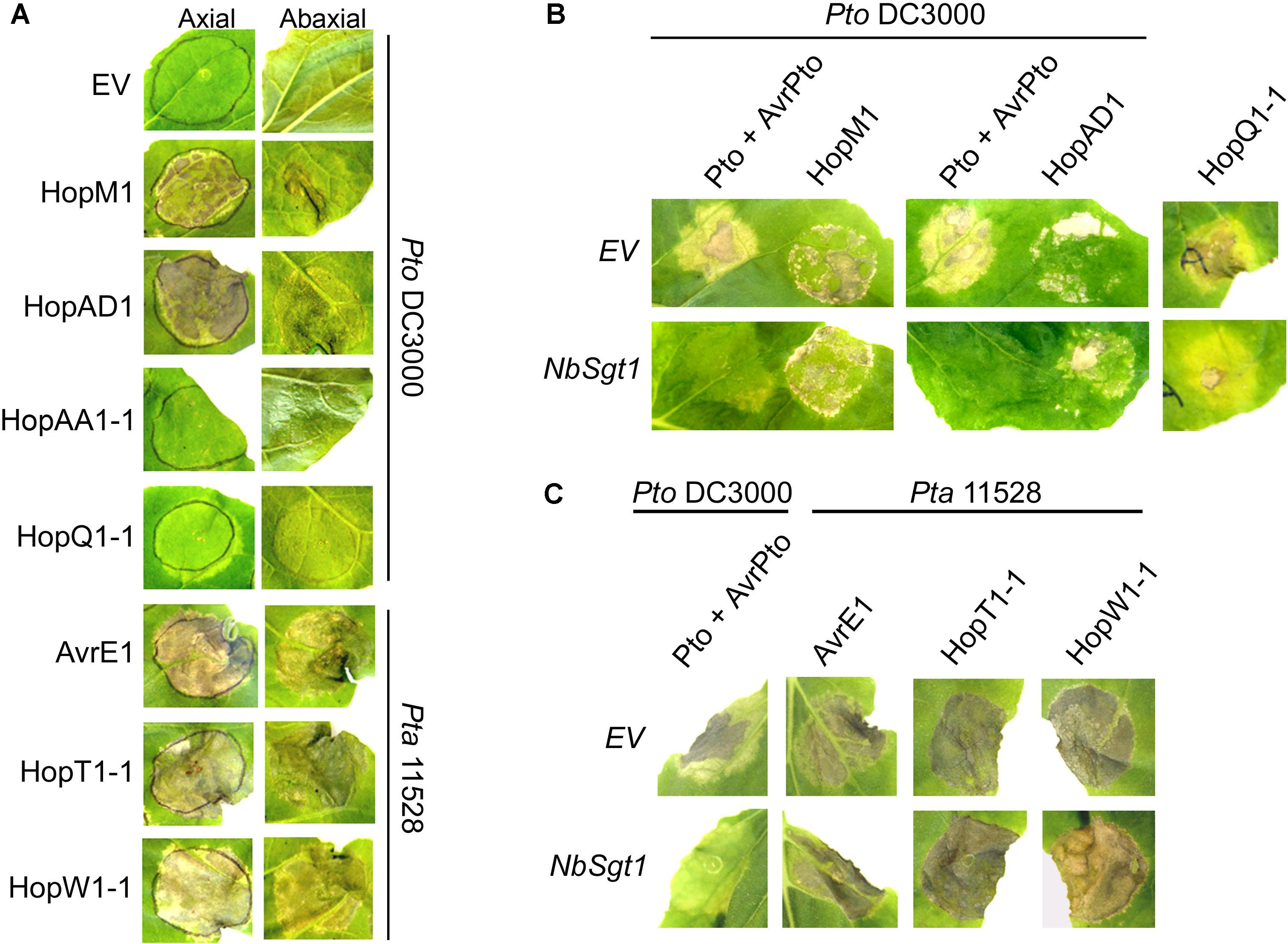 Frontiers | Differential Suppression of Nicotiana
