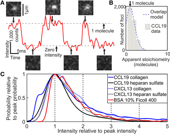 Frontiers High Speed Single Molecule Tracking Of Cxcl13 In The B