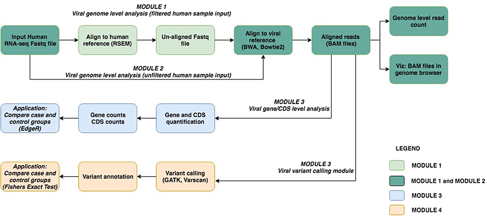 Frontiers | viGEN: An Open Source Pipeline for the Detection