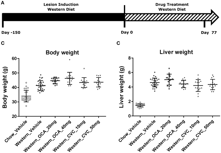 Frontiers | Progression and Regression of Hepatic Lesions in