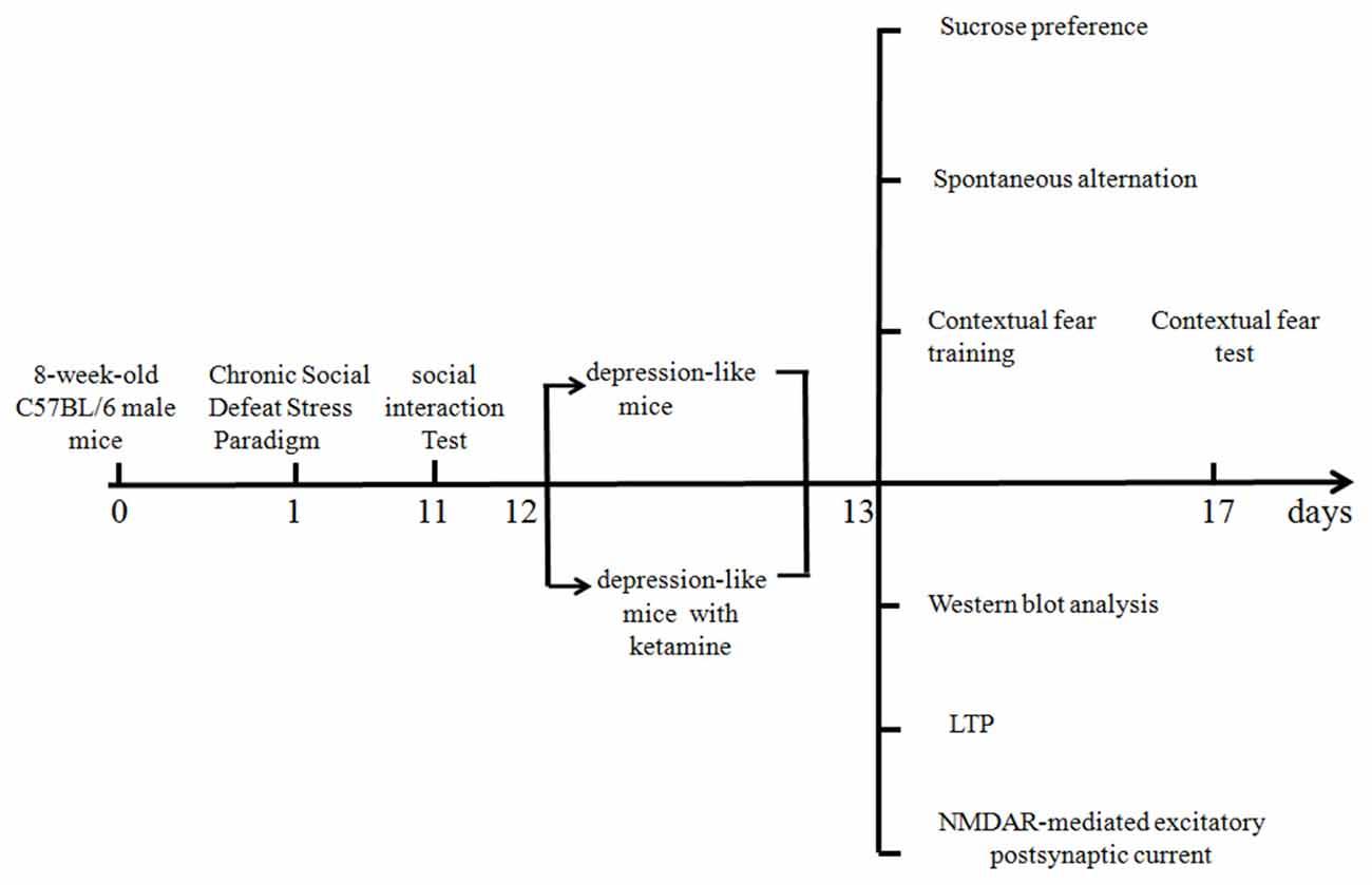 Frontiers Effect Of Ketamine On Ltp And Nmdar Epsc In Hippocampus Hand Drawn Circuit Board Schematics Bing Images