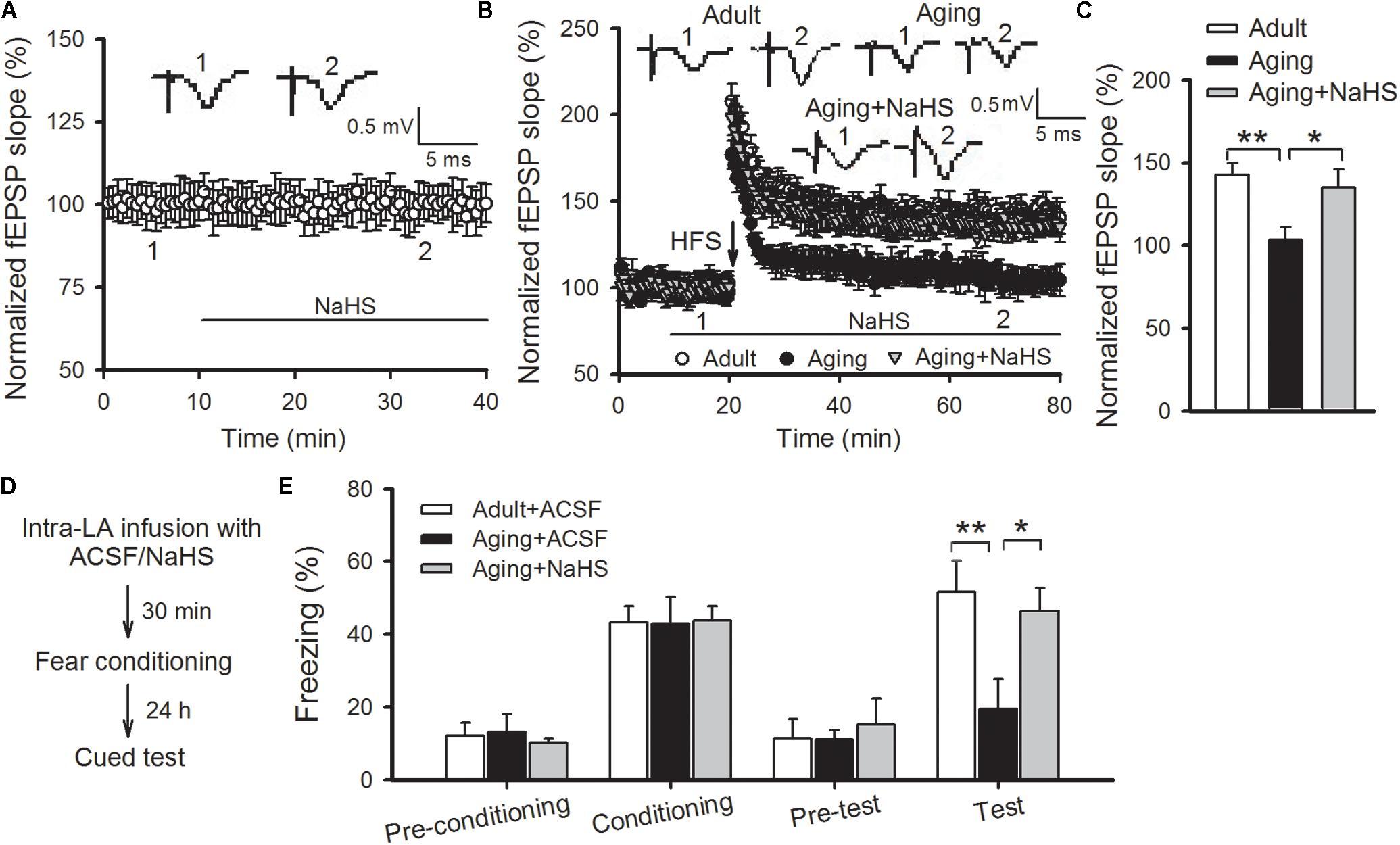 Frontiers Hydrogen Sulfide Reverses Aging Associated Amygdalar Mf 1130 Wiring Diagram