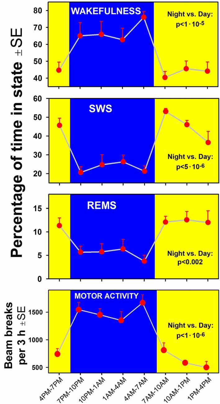 Frontiers | Modulation of Motoneuronal Activity With Sleep