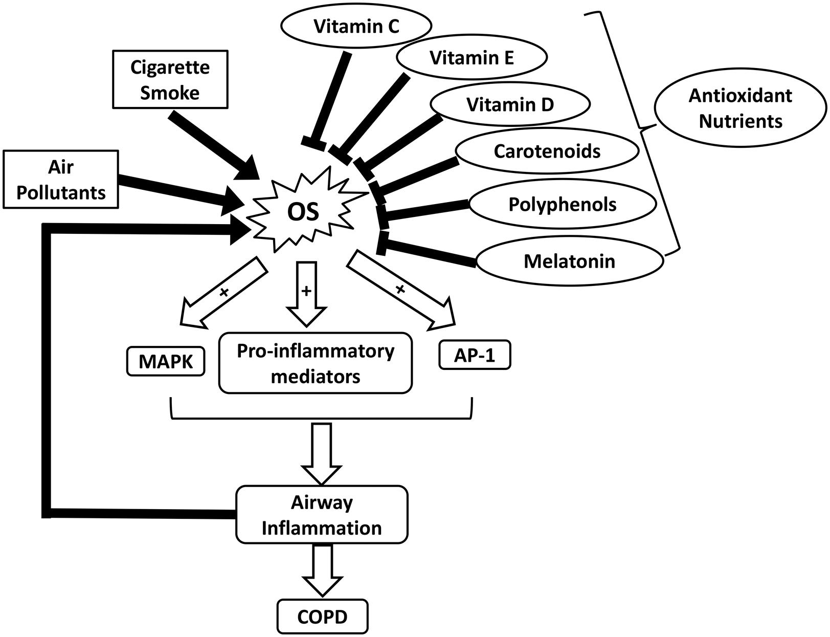 frontiers role of ros and nutritional antioxidants in human Dietary Comedy frontiersin