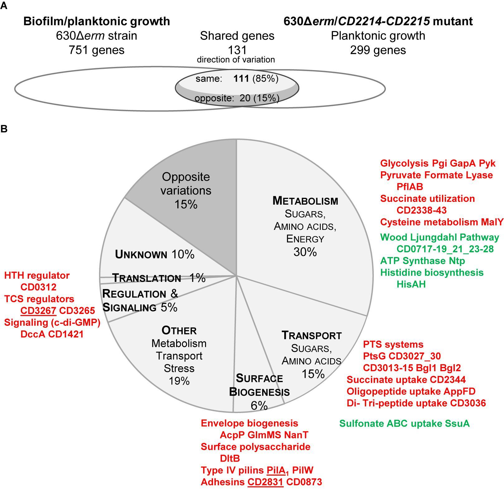 Frontiers   Clostridium difficile Biofilm: Remodeling