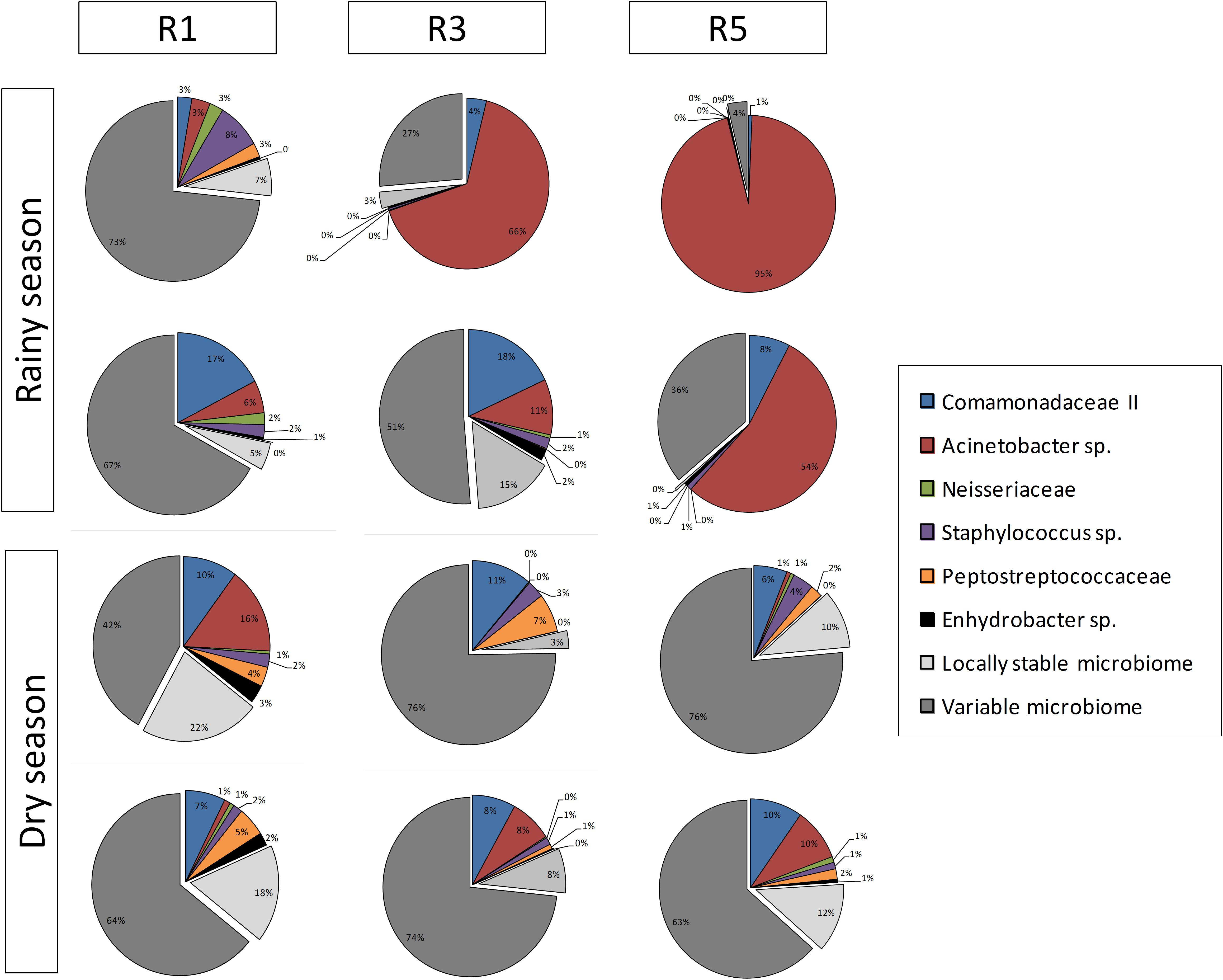 Frontiers   Coral Bacterial-Core Abundance and Network
