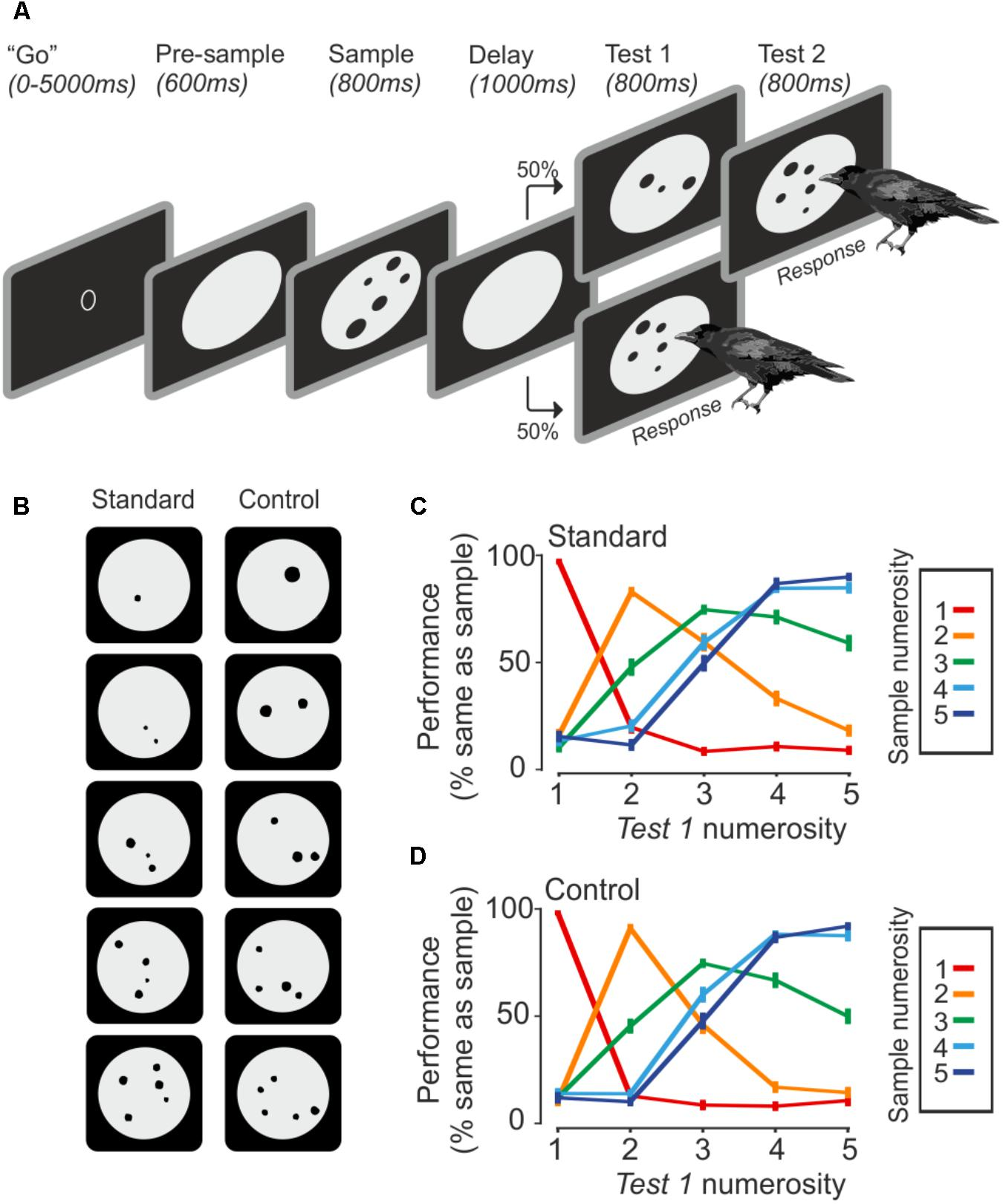 Frontiers Neurons In The Hippocampus Of Crows Lack Responses To Infra Red Light Barrier Using 555