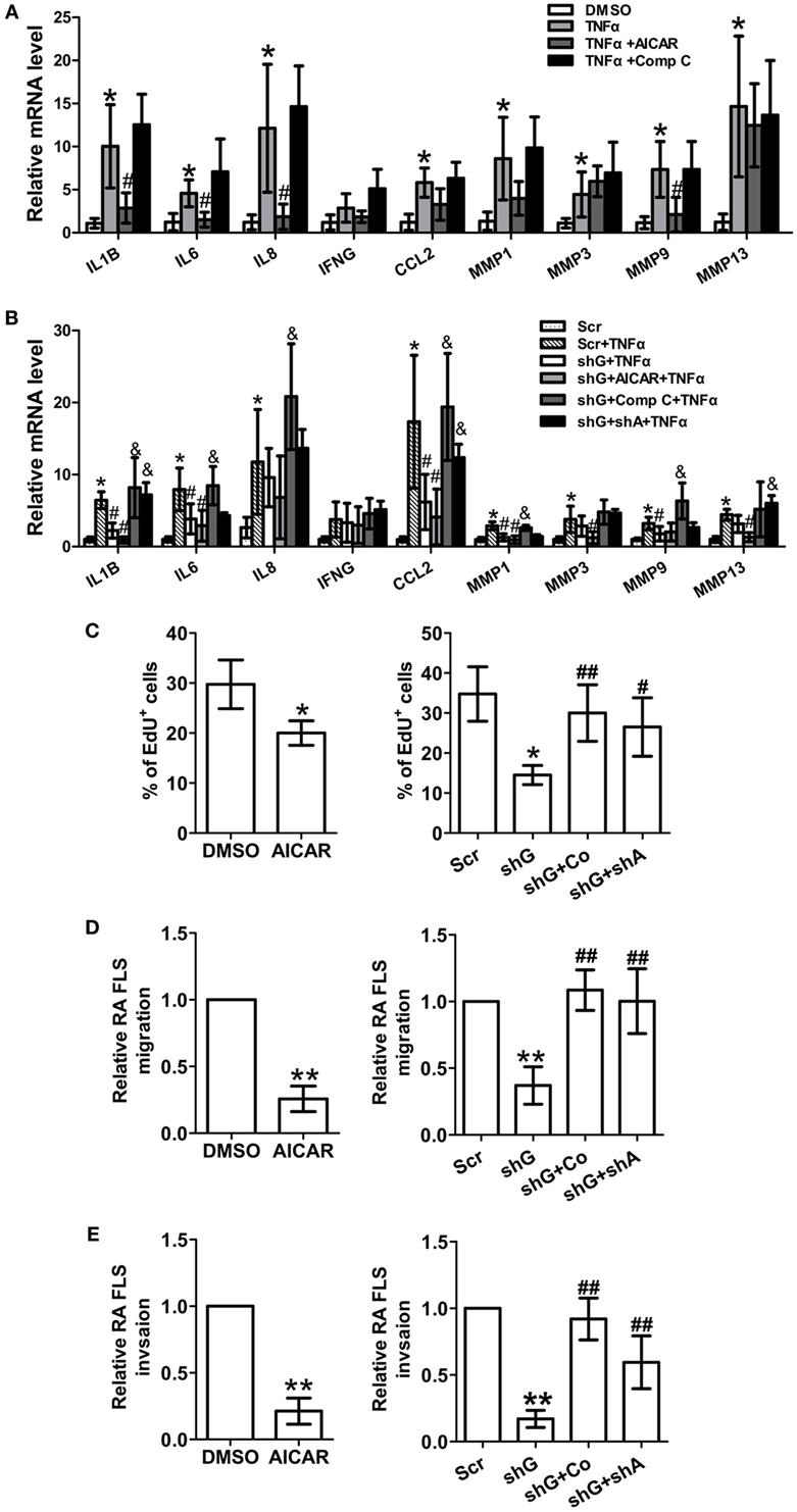 Frontiers Glycogen Metabolism And Rheumatoid Arthritis The Role Circuit Moreover Taps Control Additionally Volume Controller