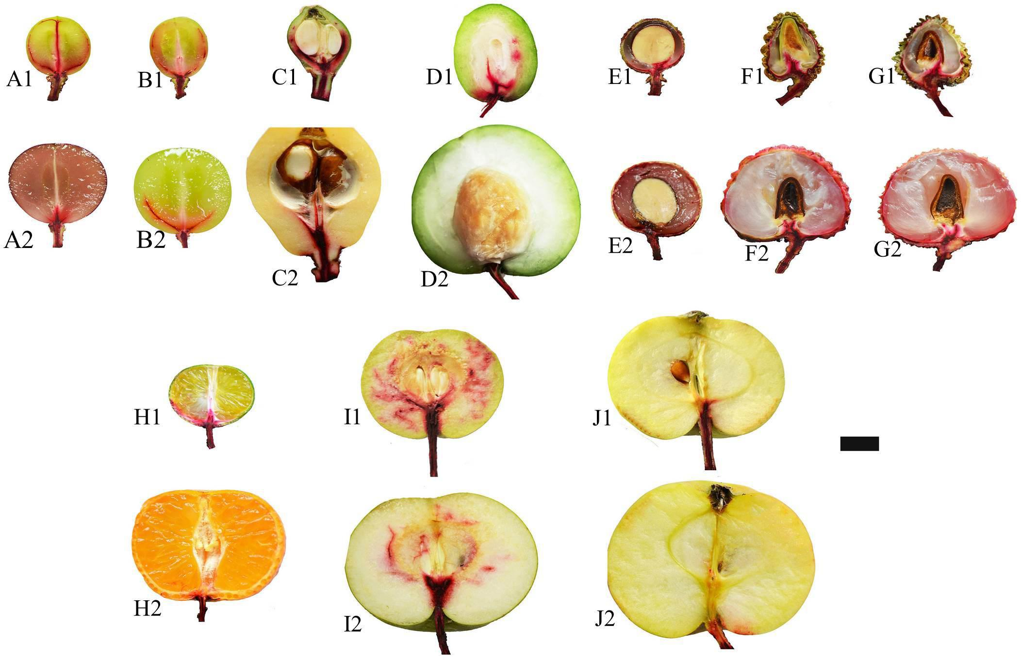 Sa bo che fruit