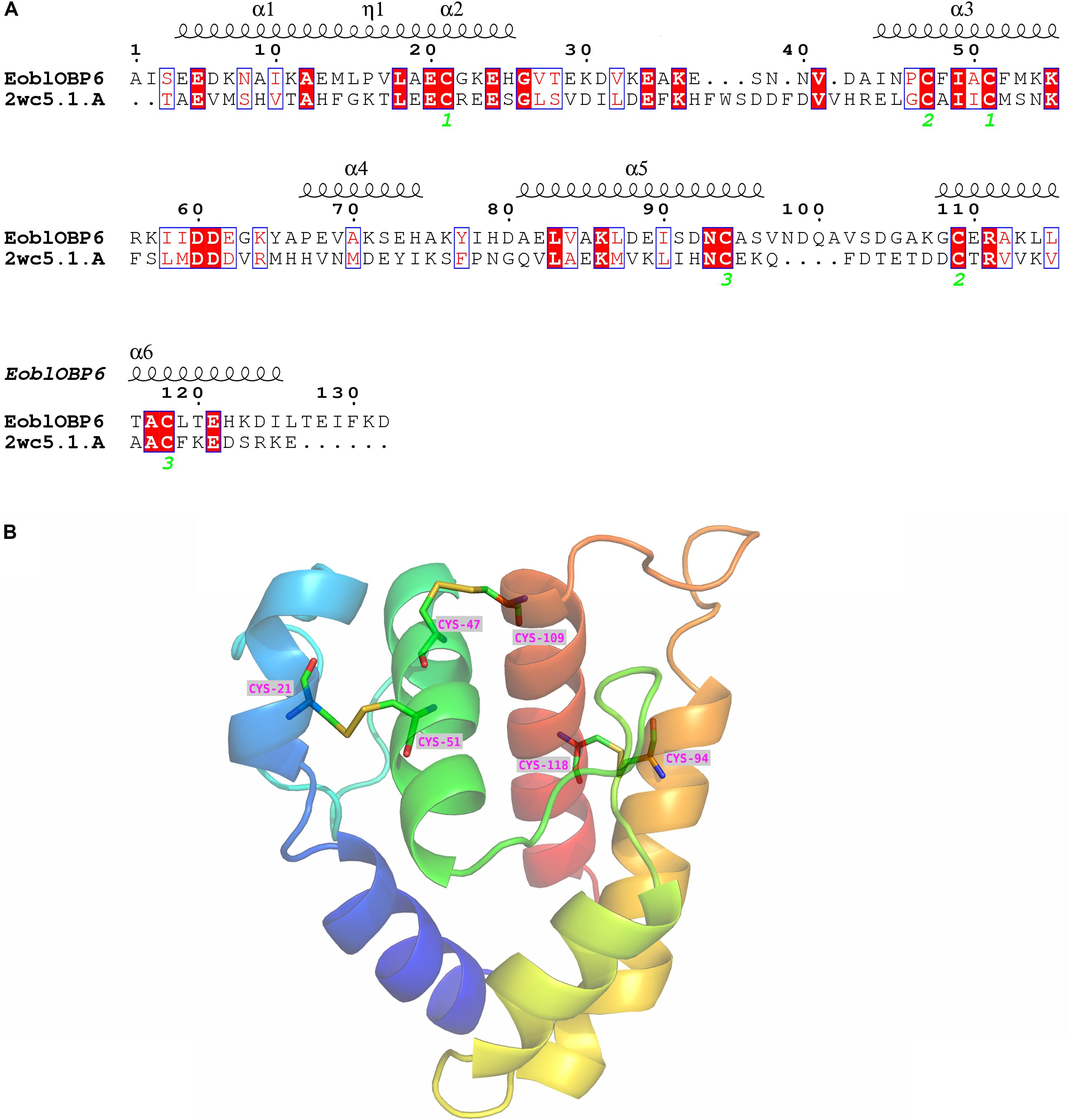 Frontiers   The Odorant Binding Protein 6 Expressed in