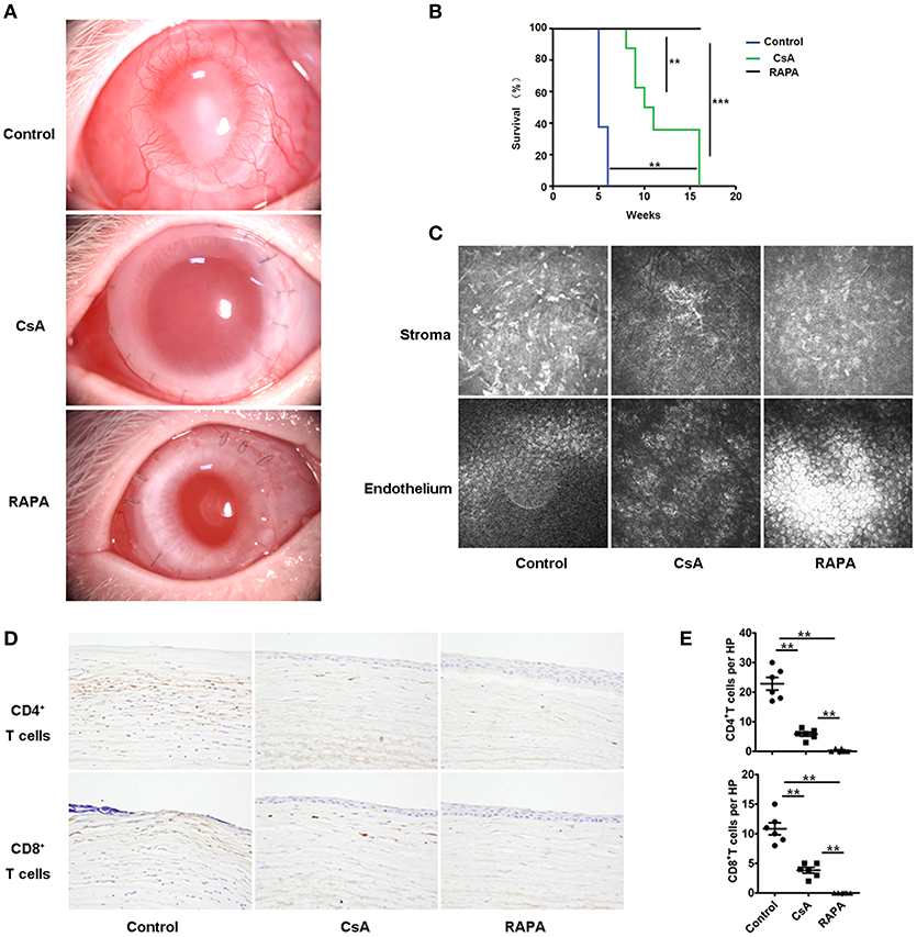 Frontiers | Rapamycin Nano-Micelle Ophthalmic Solution