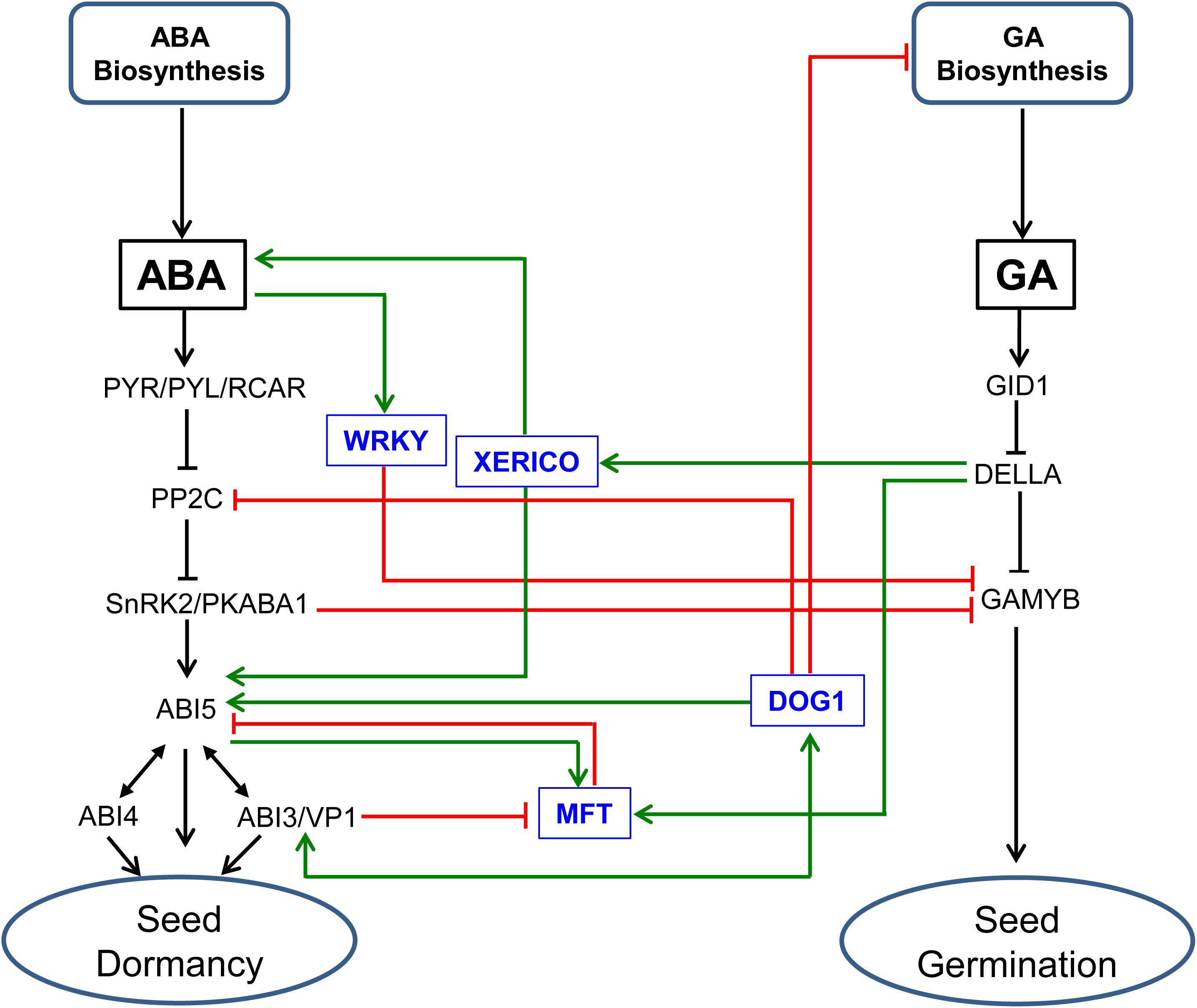 Frontiers | Molecular Mechanisms Underlying Abscisic Acid