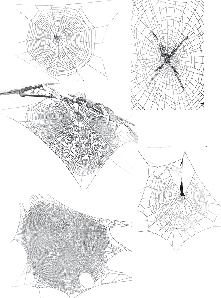 Figure 4 - Spider webs come in numerous forms and shapes.