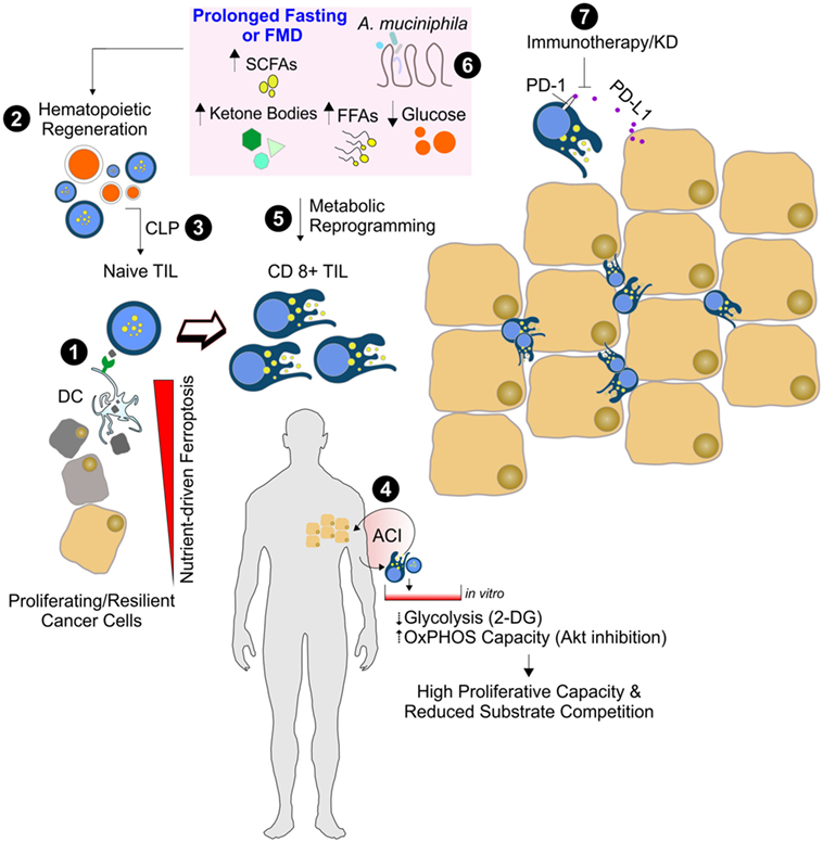 Frontiers | Pushing the Limits of Cancer Therapy: The Nutrient Game