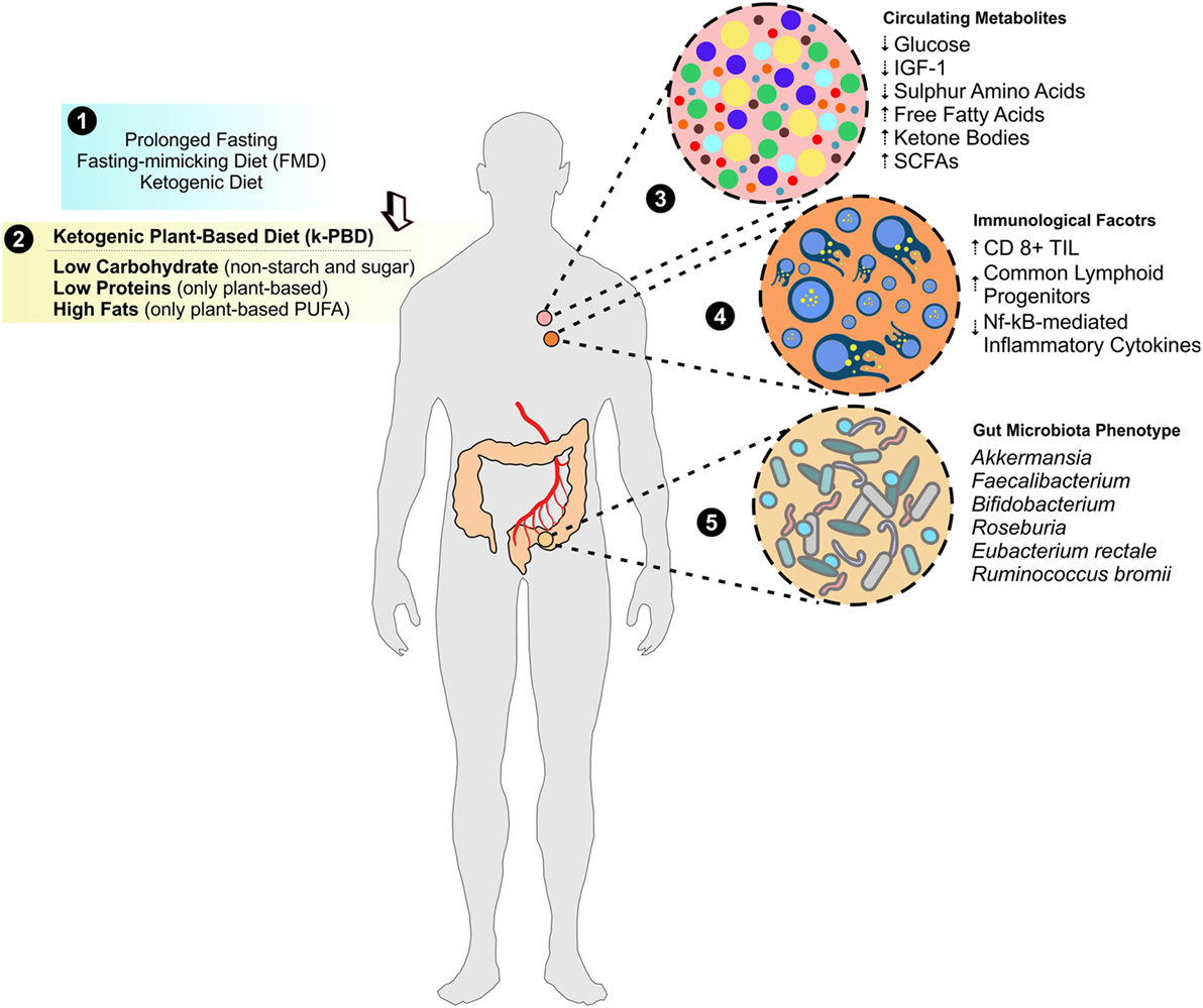 Frontiers   Pushing the Limits of Cancer Therapy: The Nutrient Game