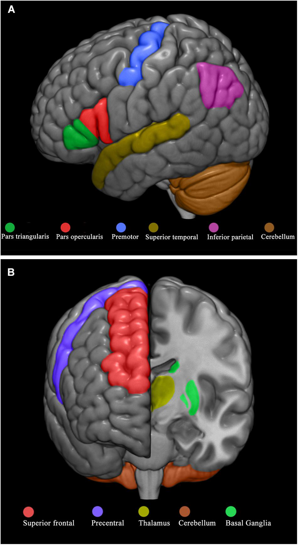 In Autism Brain Shows Unusual Thinning >> Frontiers Observational Learning In Low Functioning Children With