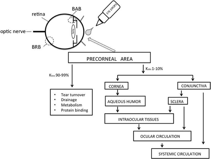 Clinical Ocular Pharmacology Pdf