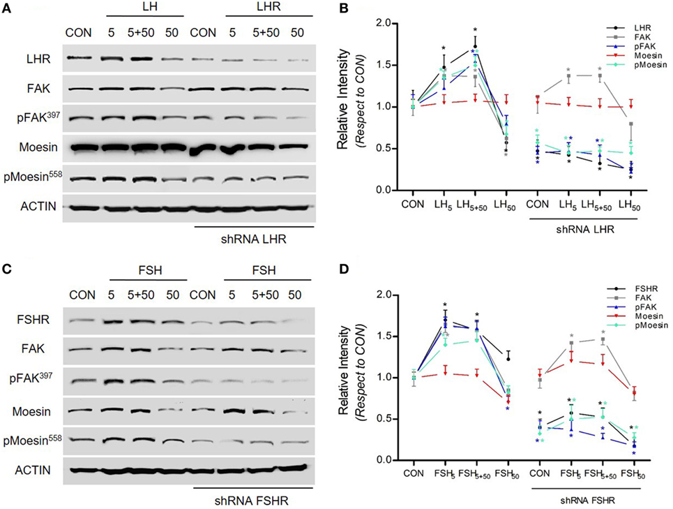 Frontiers Regulatory Actions Of Lh And Follicle Stimulating Hormone On Breast Cancer Cells And Mammary Tumors In Rats Endocrinology
