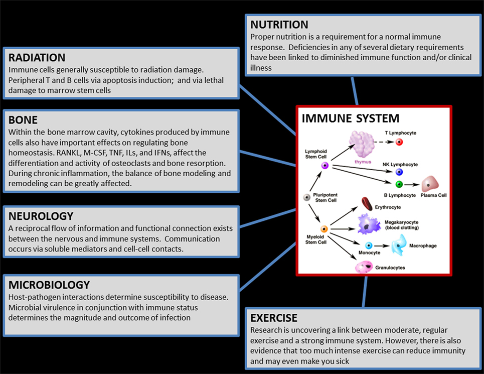 Frontiers Immune System Dysregulation During Spaceflight