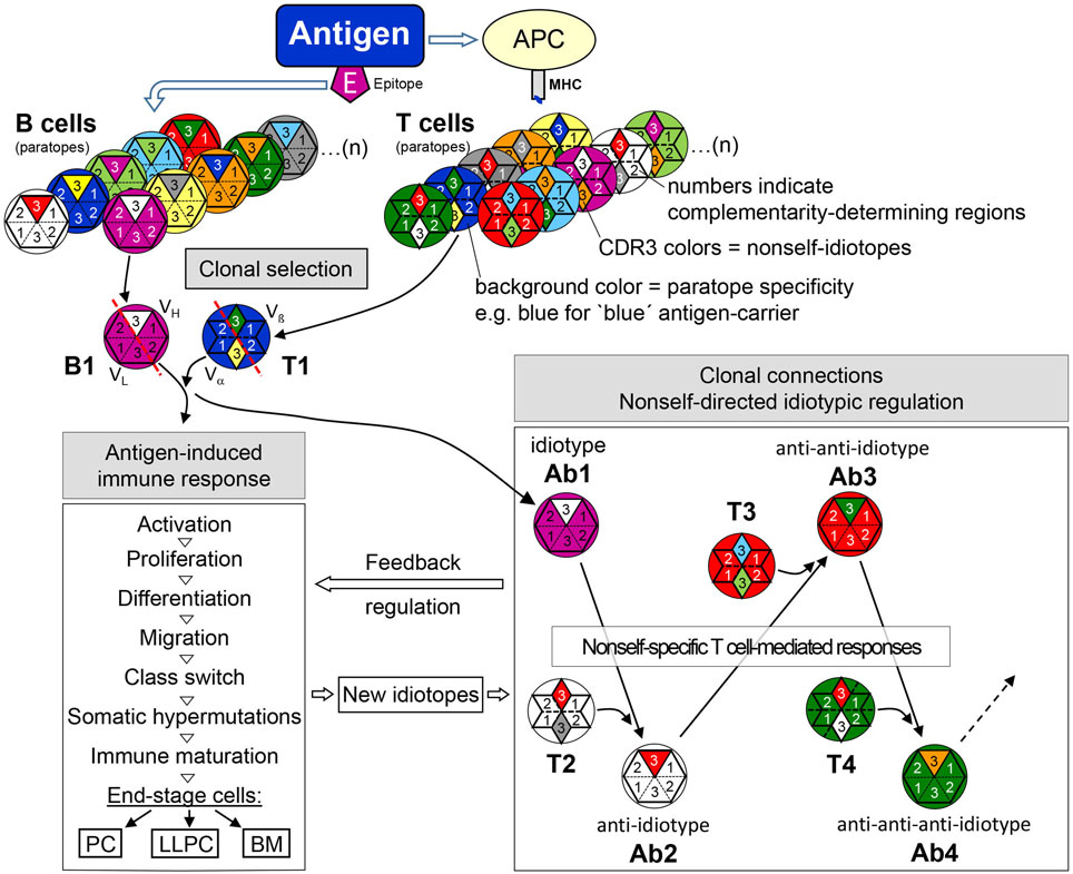Physiology and Pathology of Immune Dysregulation: Regulatory T Cells and Anergy