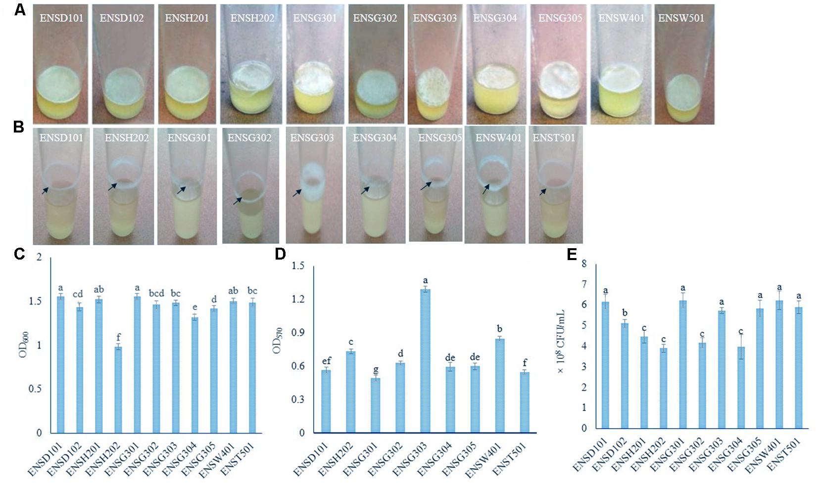 Frontiers | Metal-Adapted Bacteria Isolated From Wastewaters