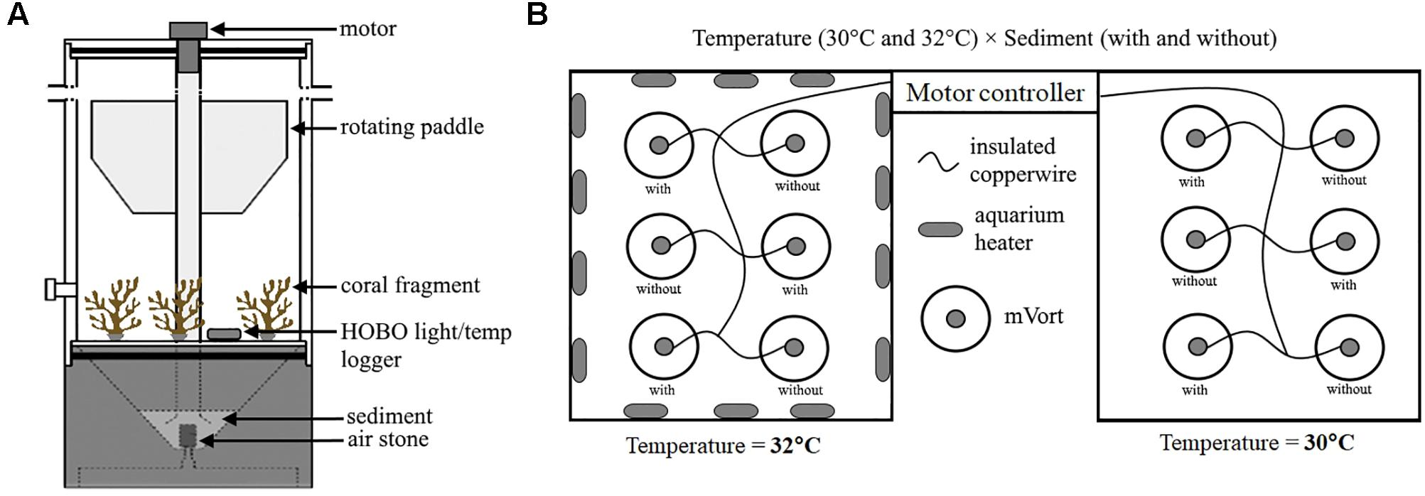 Frontiers | Short Term Exposure to Heat and Sediment Triggers
