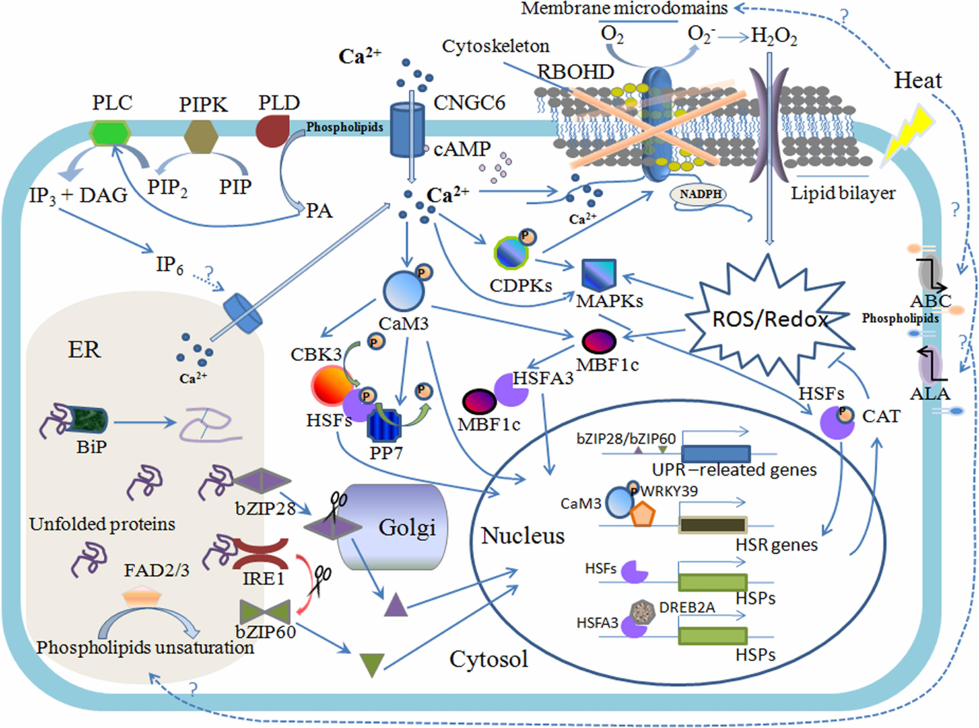 Frontiers | An Overview of Biomembrane Functions in Plant