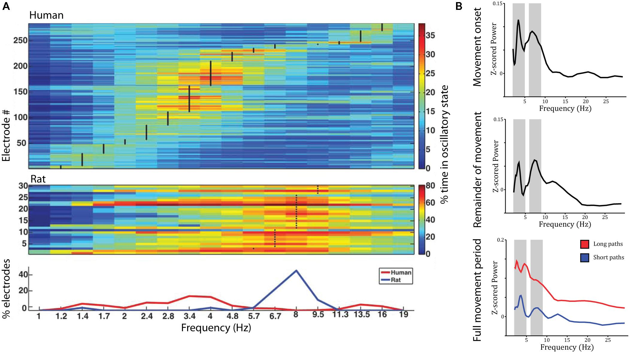 Frontiers | Spatial Representations in the Human Brain | Frontiers ...
