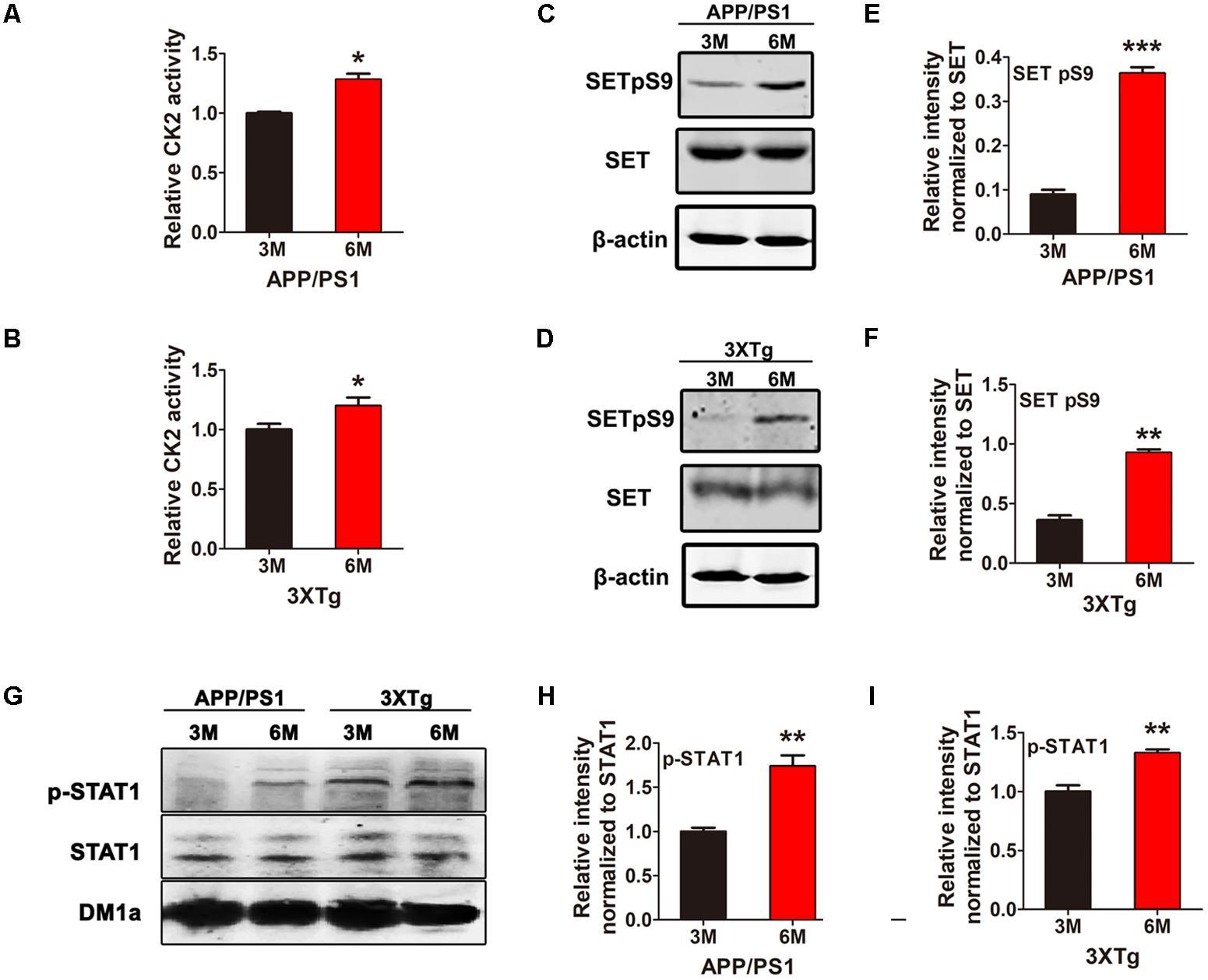 Frontiers | CK2 Phosphorylating I2PP2A/SET Mediates Tau Pathology