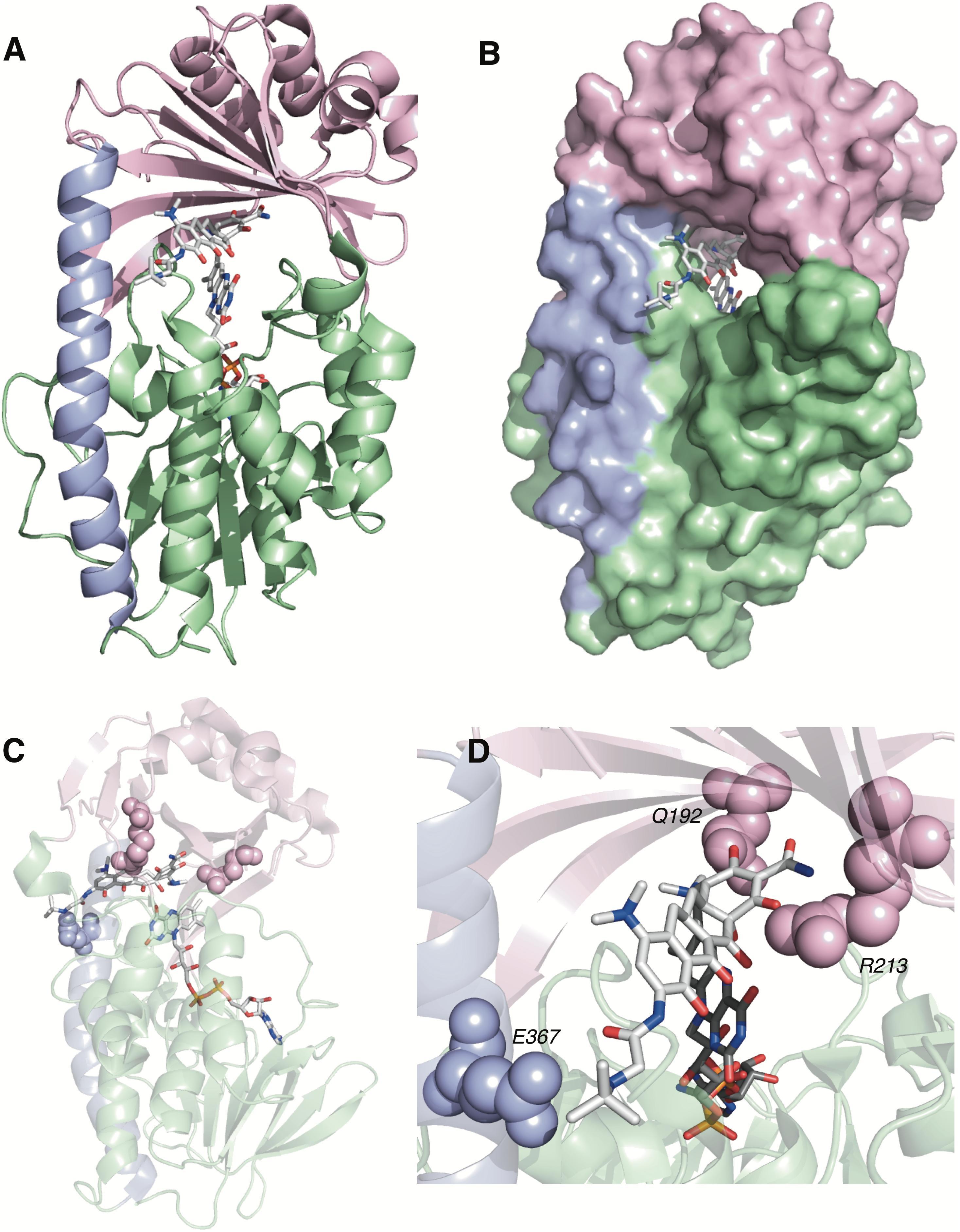 Tigecycline microbiology study