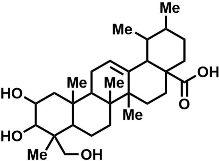 bacteria morphology diagram