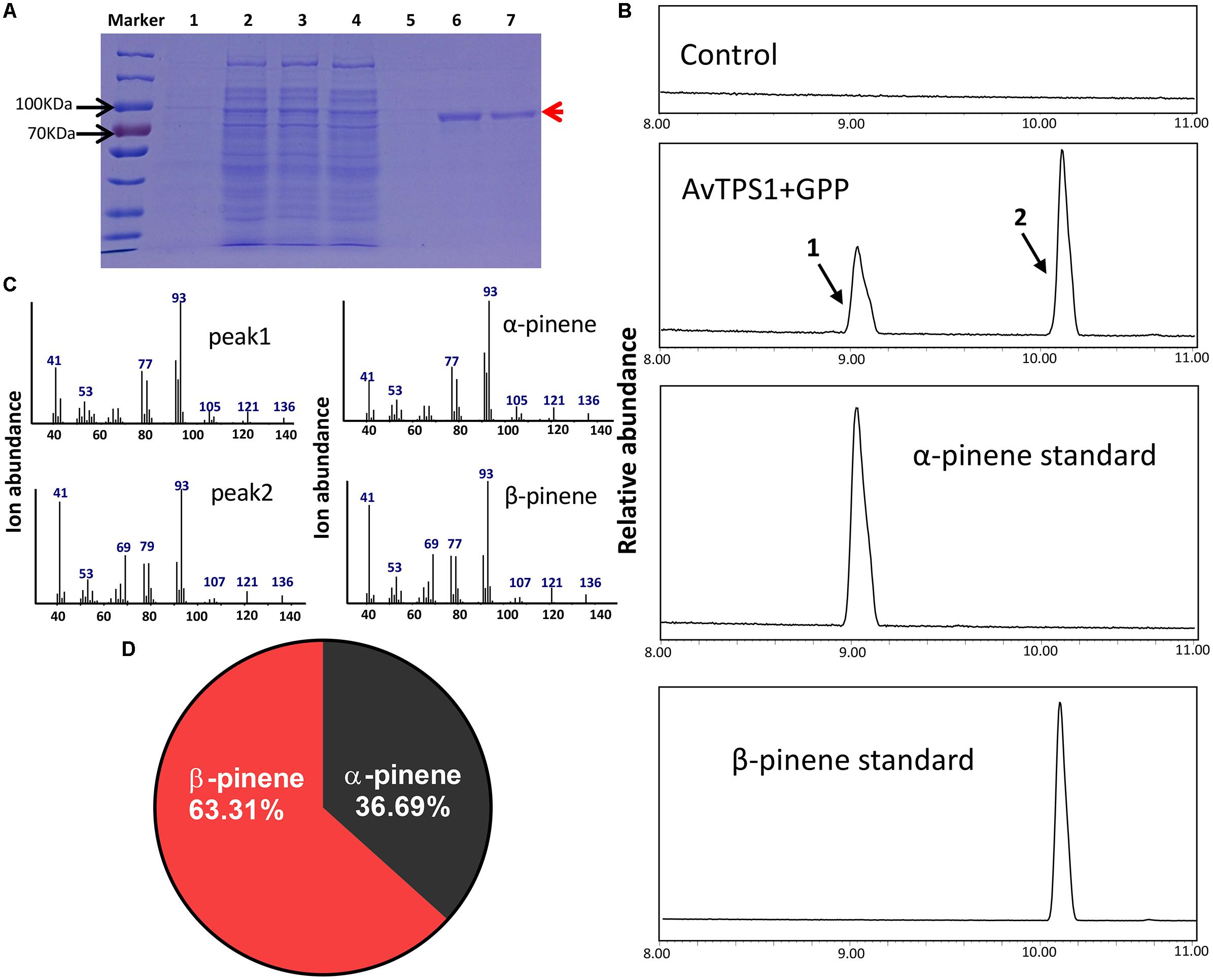 Frontiers | An Integrative Volatile Terpenoid Profiling and