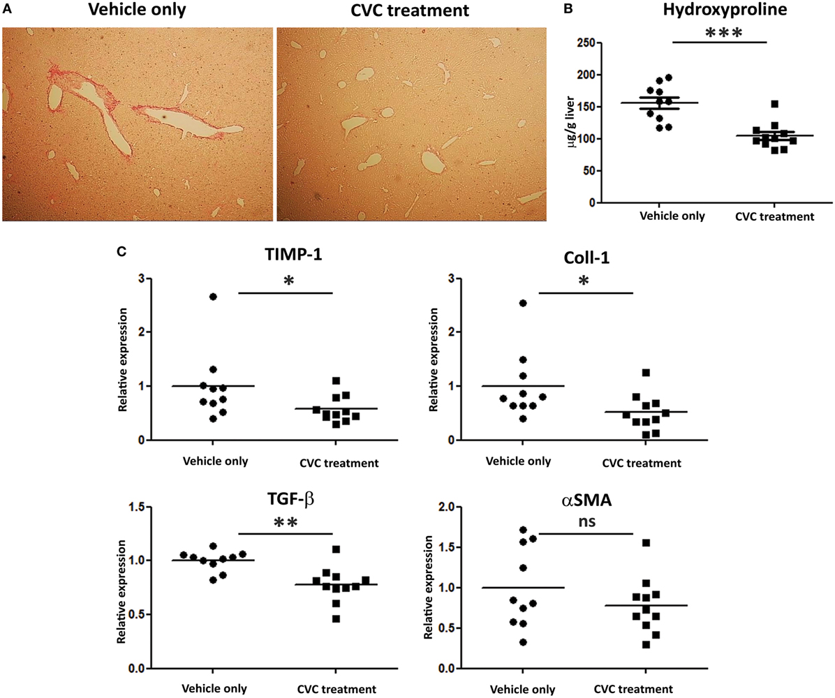 Frontiers | The Critical Role of Chemokine (C–C Motif