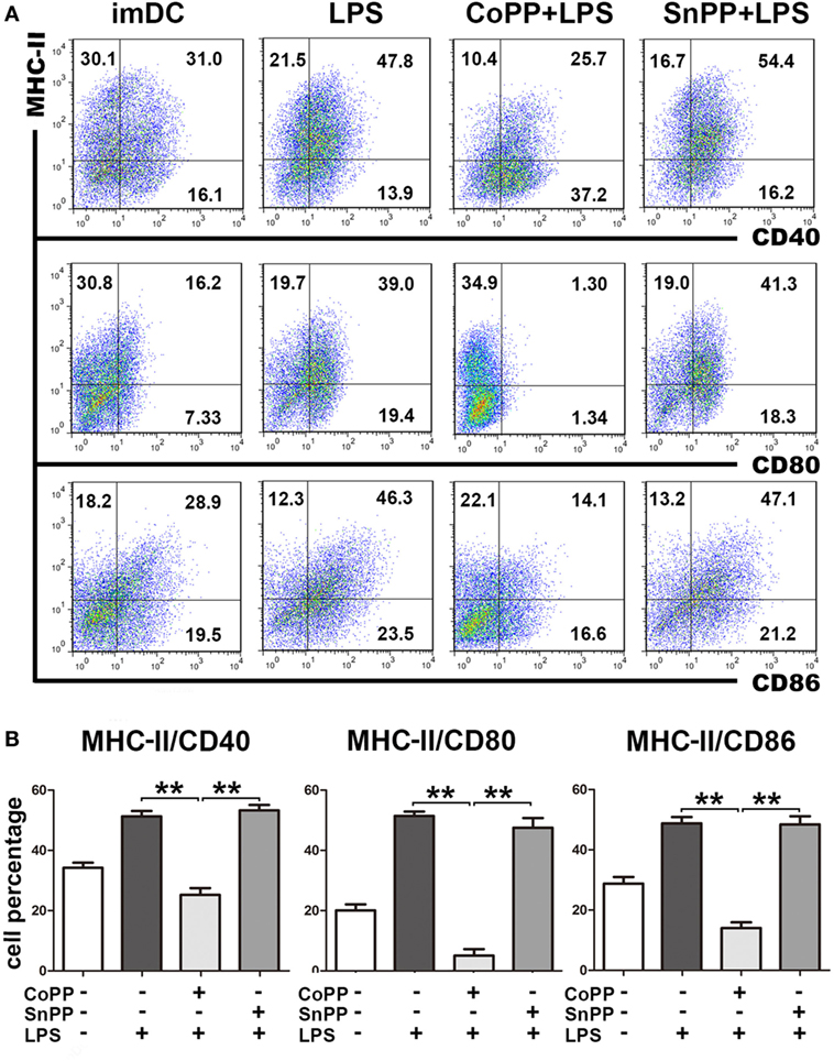 Frontiers   Upregulation of Heme Oxygenase-1 Endues Immature