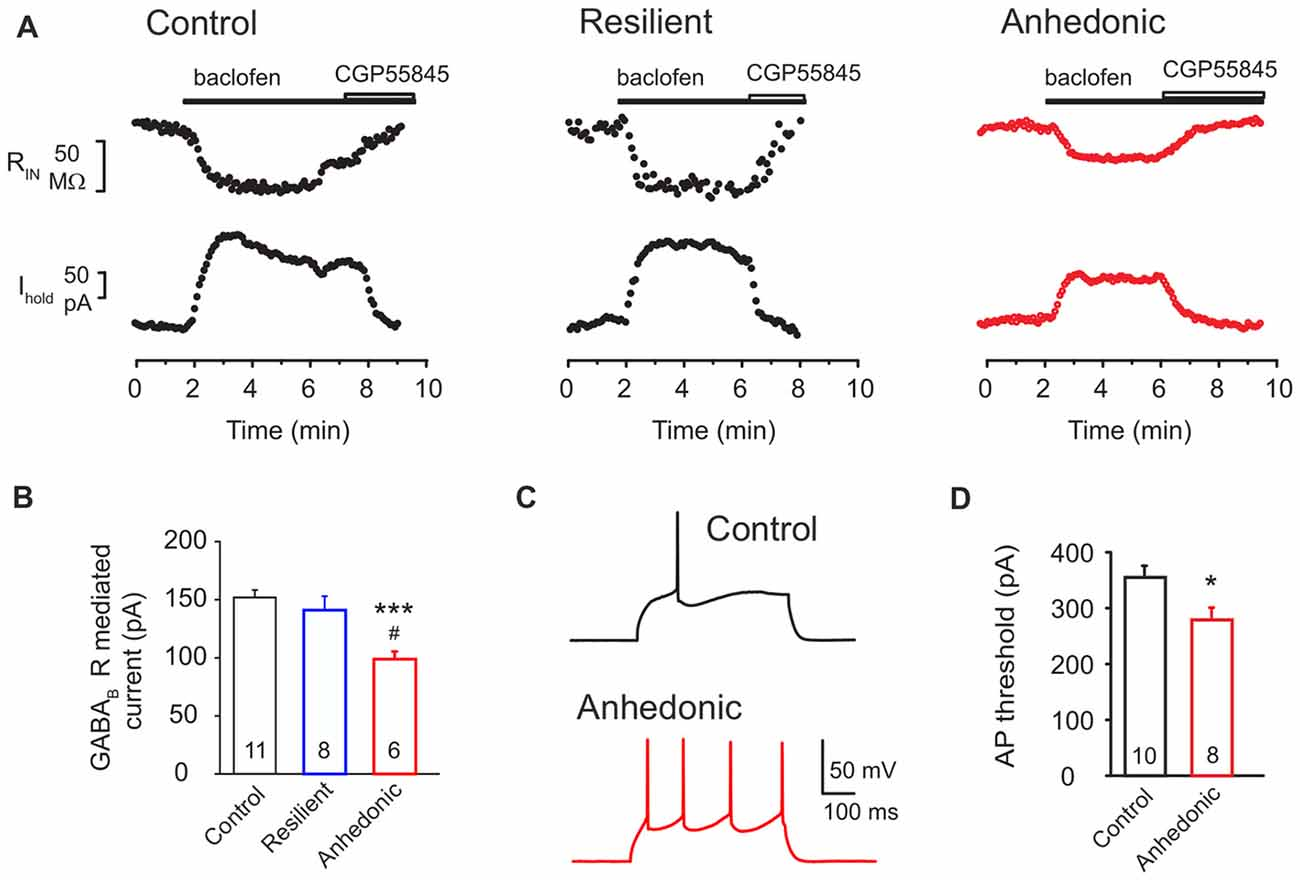 Frontiers | Long-Term Stress Disrupts the Structural and Functional on
