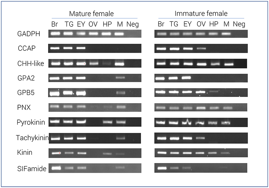 Frontiers | Insights Into Sexual Maturation and Reproduction