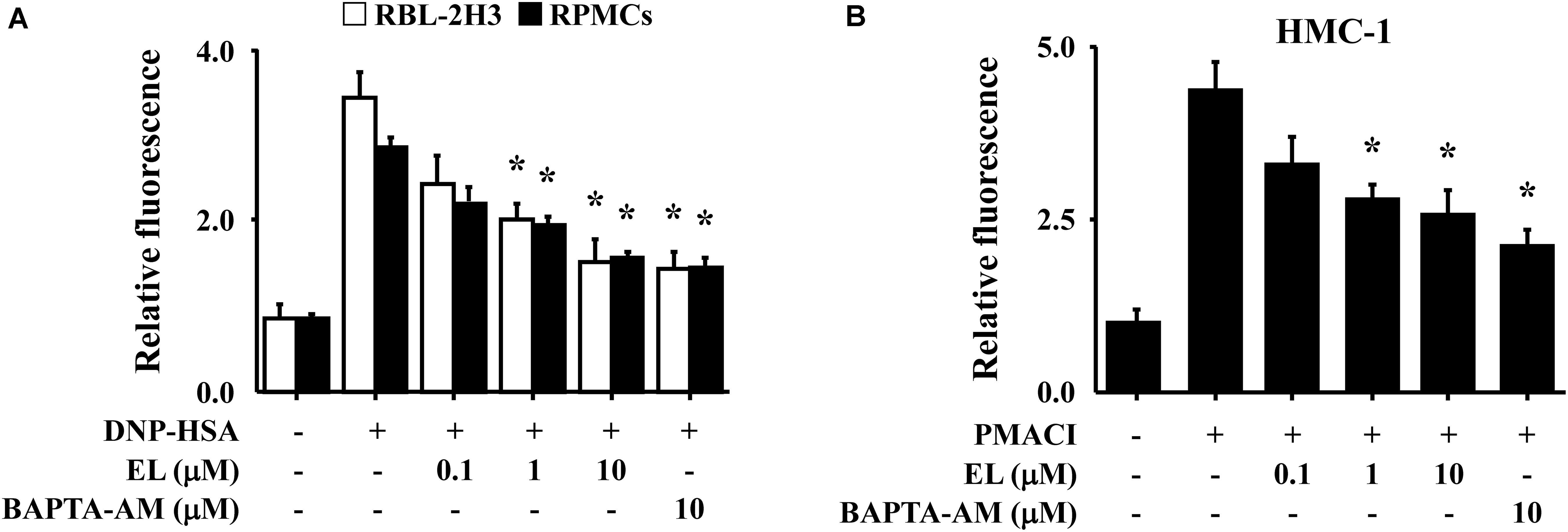 Frontiers | Elaeocarpusin Inhibits Mast Cell-Mediated